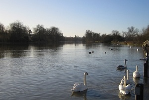 The River Thames at Higginson Park, Marlow